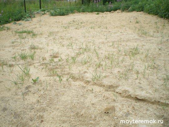 посеяли газон