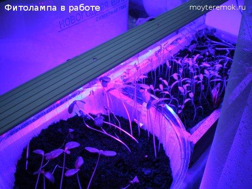 светодиодная фитолампа светит на рассаду