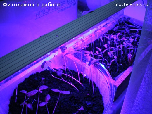 фитолампа светит на рассаду