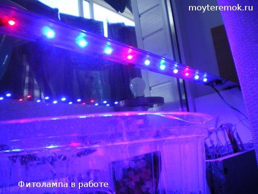 светодиодная фитолампа в работе