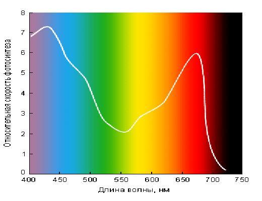 фотосинтез график от длины волны