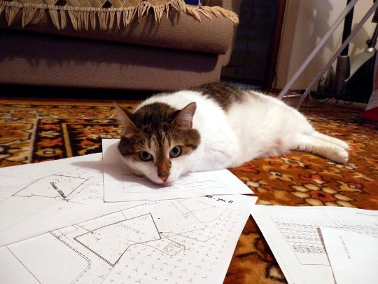 кот помогает выбирать земельный участок