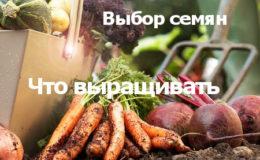 овощи проще выращивать